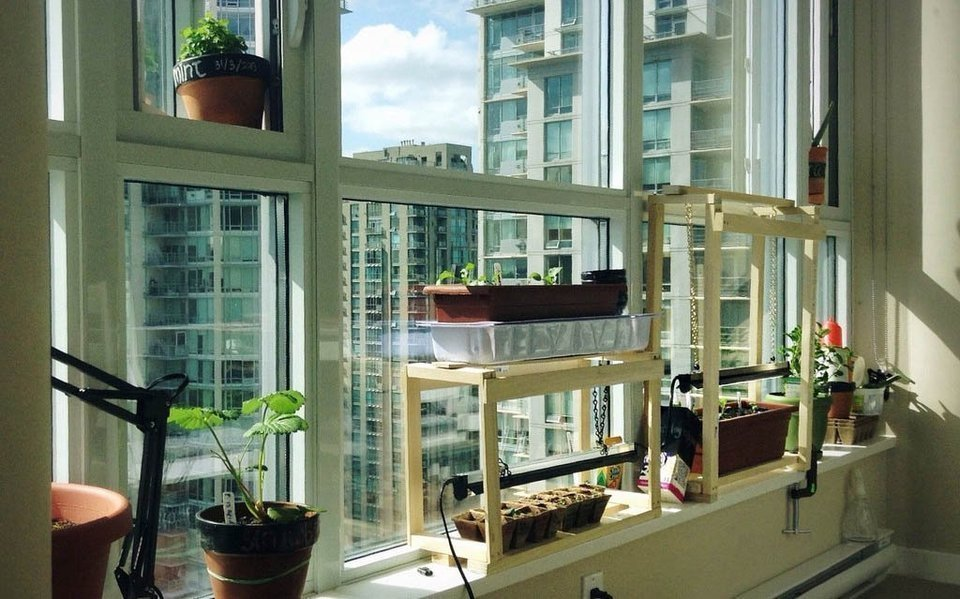 Urban gardening in the apartment