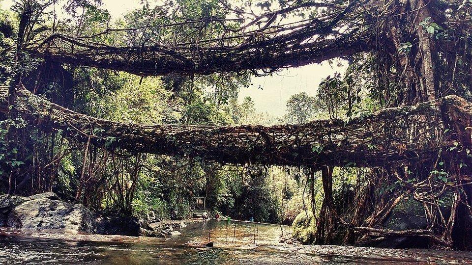 Cherrapunji Root Bridges in India